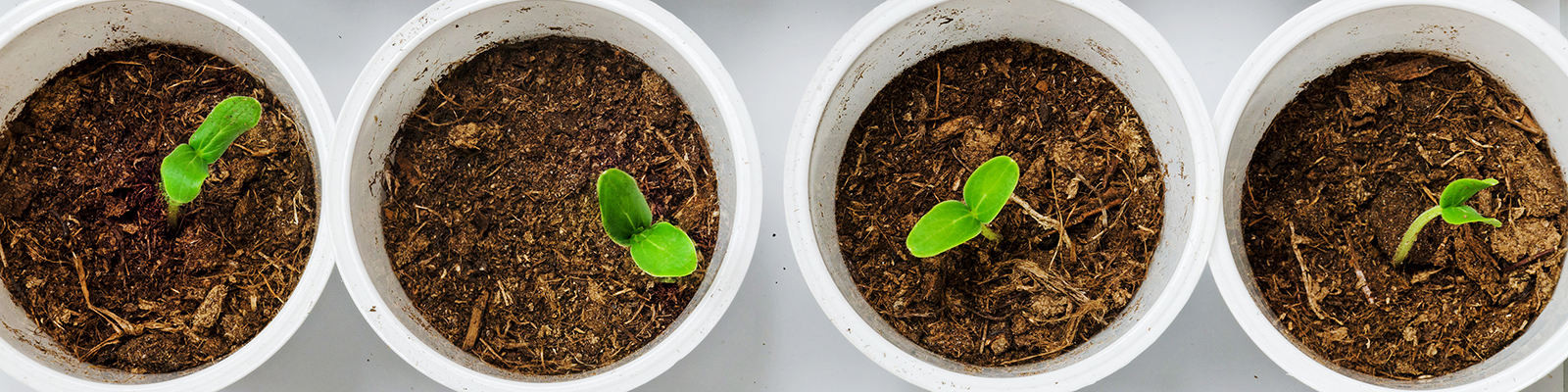 Young green plant seedlings.