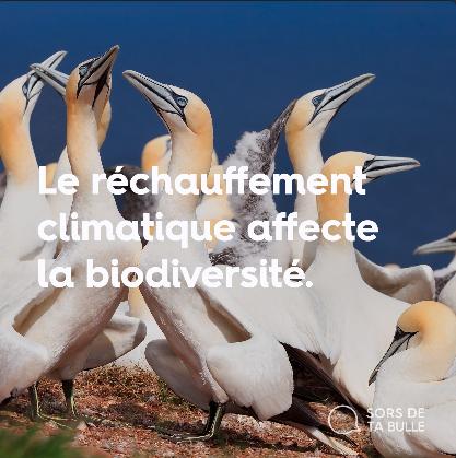 Savais-tu que le réchauffement climatique affecte la biodiversité?
